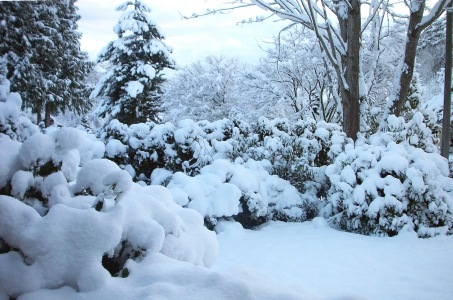SnowDay_030107_02(rev 1)